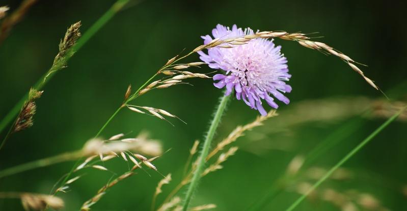 fleurs en vrac! Fleurs12