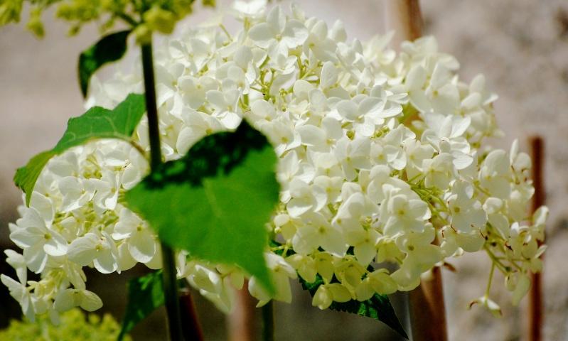 fleurs en vrac! Hort710