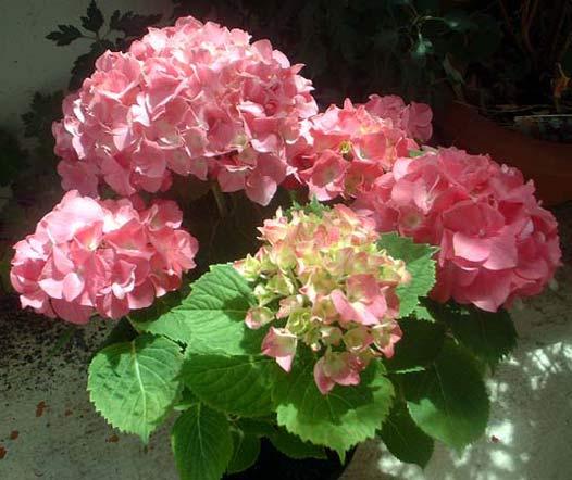 fleurs en vrac! - Page 2 Hort_a10