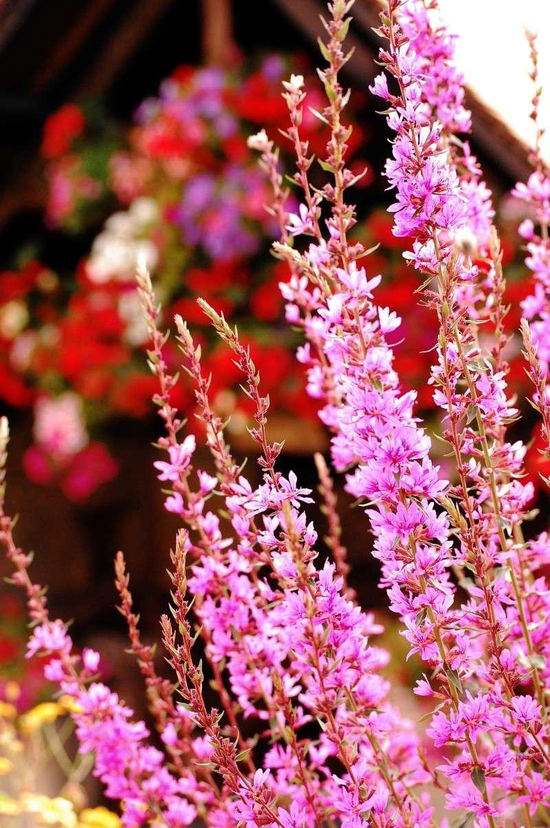 fleurs en vrac! M9410