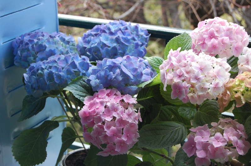 fleurs en vrac! Montal11