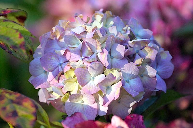 fleurs en vrac! Perso_10