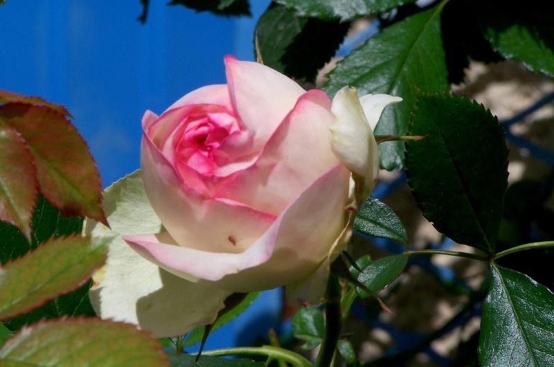fleurs en vrac! Photo_10