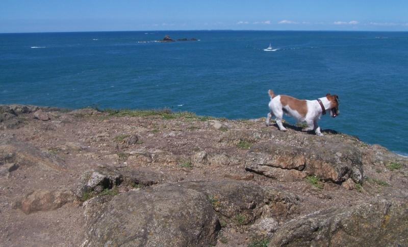 chien sur les cotes bretonnes! Pointe10