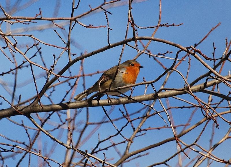 oiseau qui a fait son nid Rougeg10