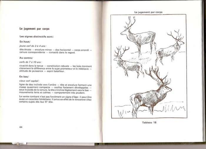 reconnaitre un cerf  C1 ou C2 - Page 2 30-09-11