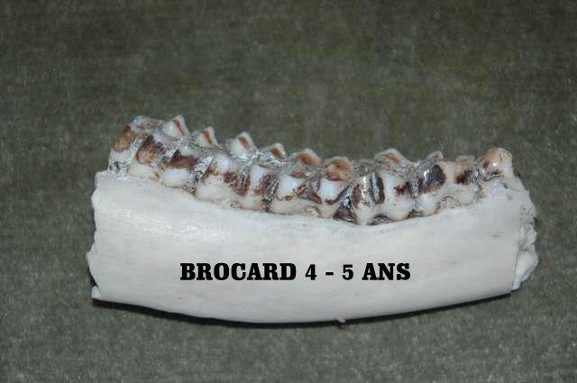 Trophée de brocards. - Page 4 Brocar13