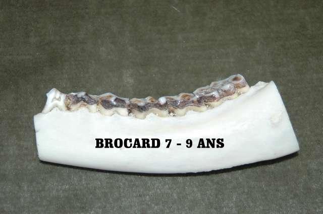Trophée de brocards. - Page 4 Brocar16