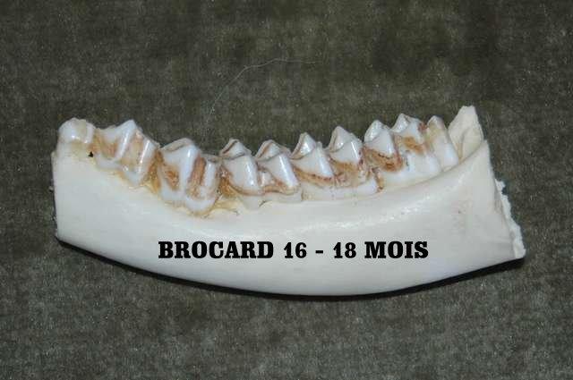 Trophée de brocards. - Page 4 Brocar17