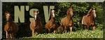 Academie Horses Sans_t22