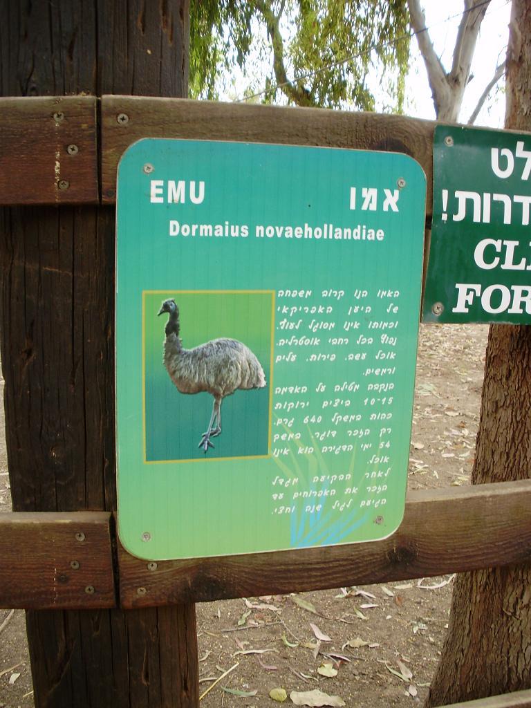 ISRAEL DU NORD AU SUD SUIVEZ-MOI P4230415