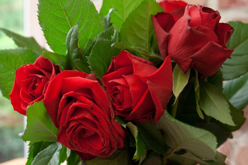 bouquet de rose -694110