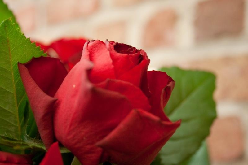 bouquet de rose -694210