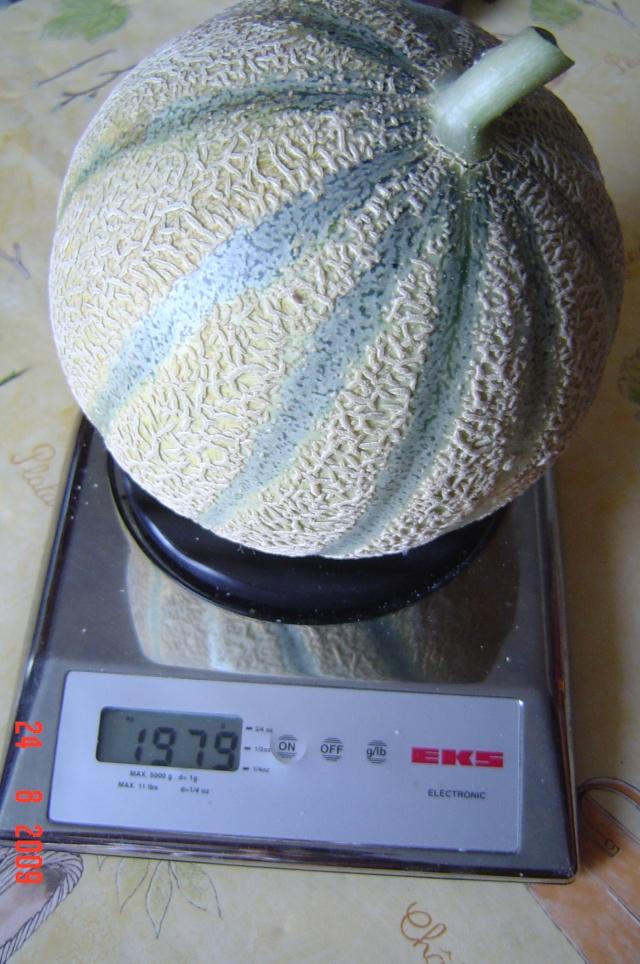 le premier melon  du  jardin Melon_10