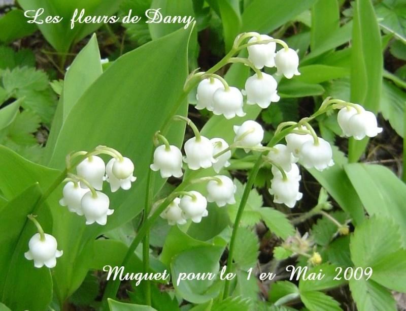 01 mai Muguet11