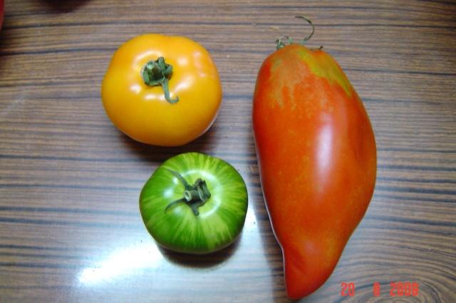 récolte au  jardin Tomate10