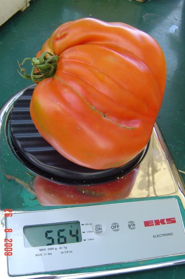mes tomates  bizzares Tomate12