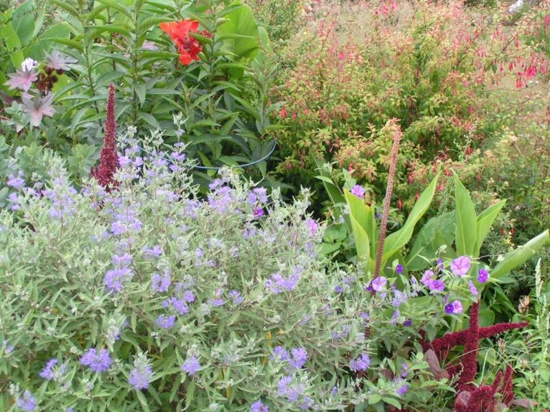 quelques photos de mon jardin - Page 2 Pict0011