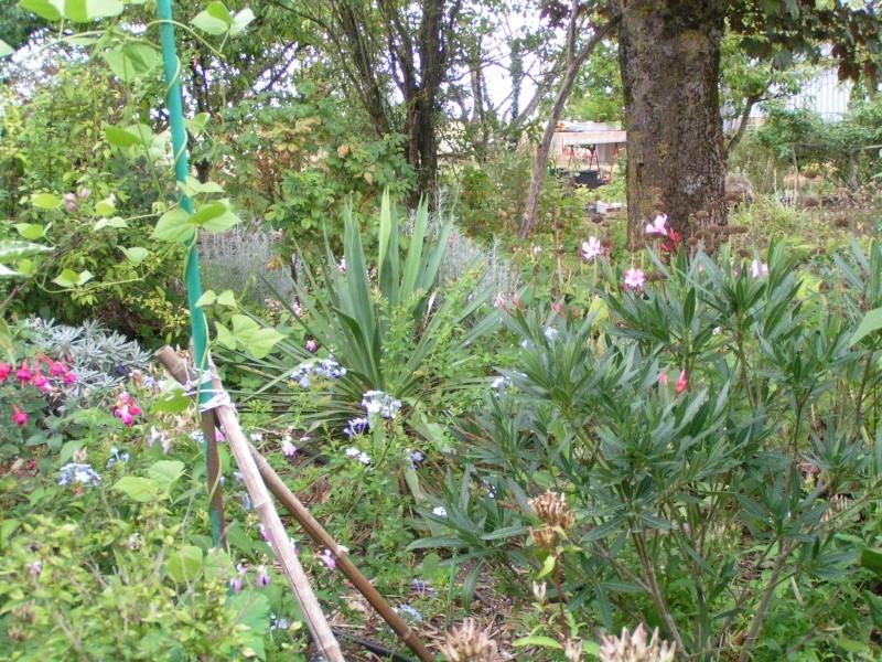 quelques photos de mon jardin - Page 2 Pict0014