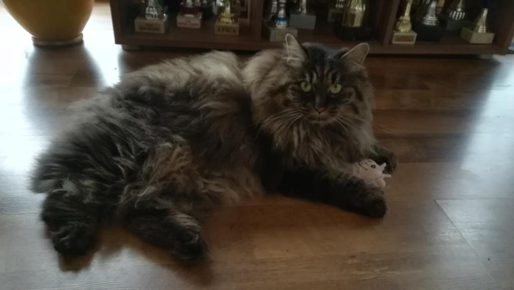 Nouveau chat Img_2016