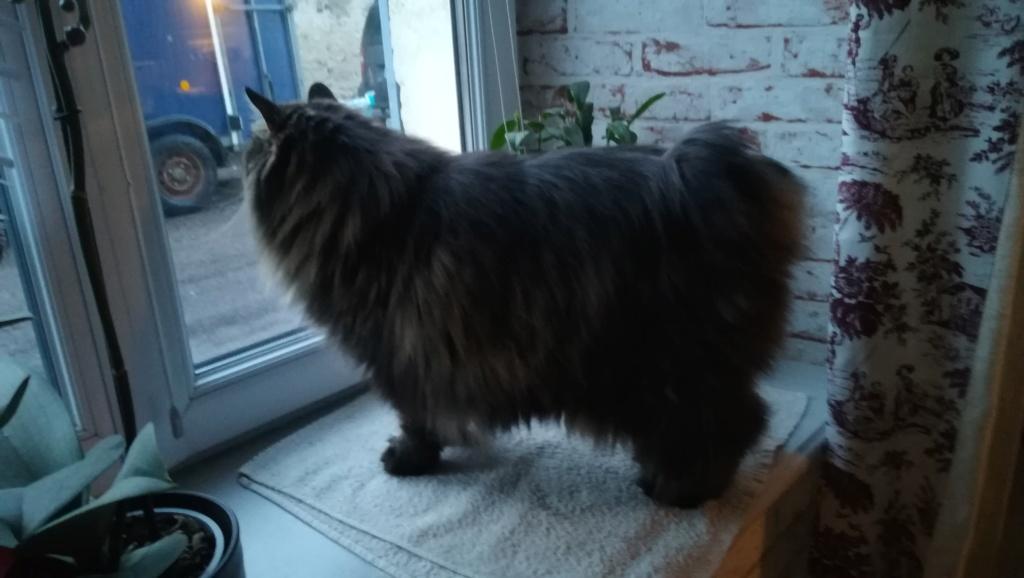 Nouveau chat Img_2017