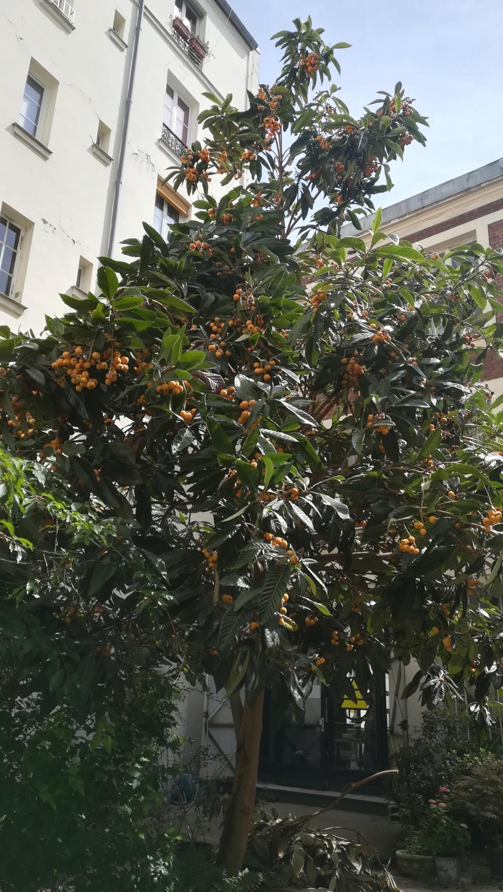 Arbre avec des fruits oranges Img_2036