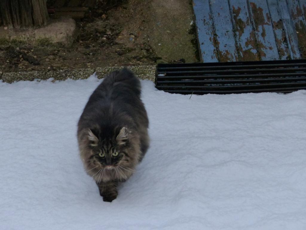 Nouveau chat - Page 2 P1080711