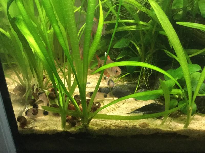 Aquarium planté A²TP Image16