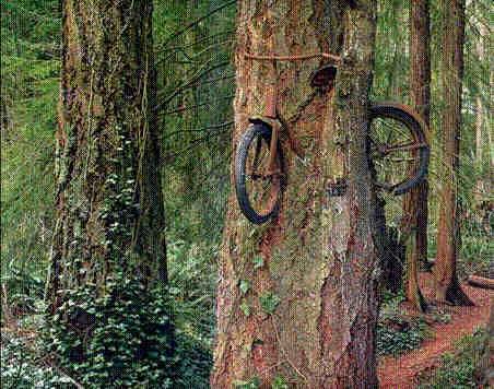 arbre Arbre10