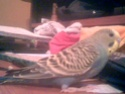 Dunkel Passaro ou l'oiseau foncé 2009-016
