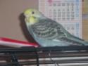 Gahïa et Ériale sont fière de vous présenter... Oiseau60