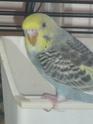 Gahïa et Ériale sont fière de vous présenter... Oiseau63