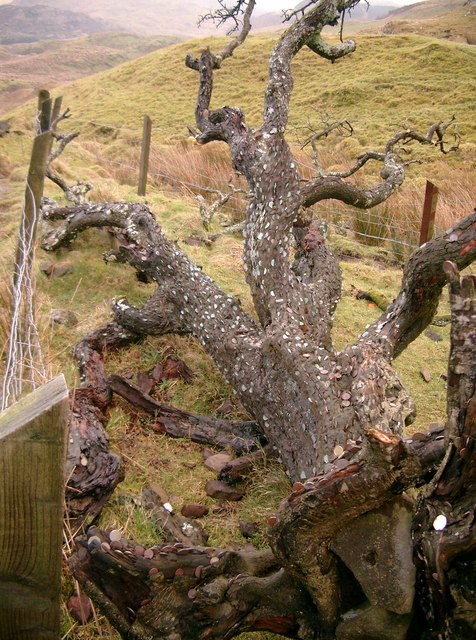 Ardmaddy Wishing Tree Ardmad11