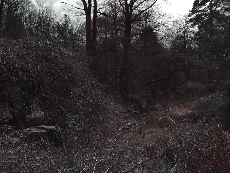 Photos des Faux de la foret de Verzy Faux_d34