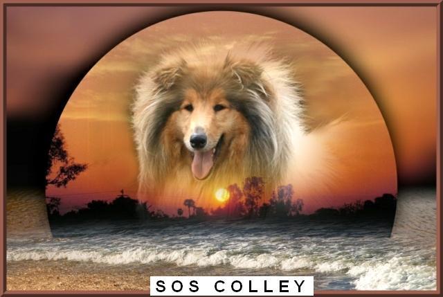 SOS Colley