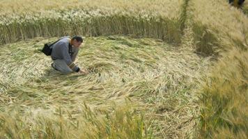 Crop circle : Le signe de Checy (45) par Francine CORDIER-SERAY, Patrice SERAY et Gilles MUNSCH Checy10