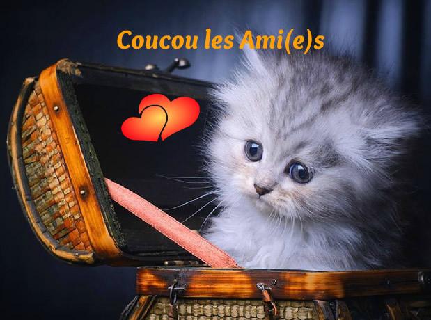 Ici on se dit bonjour  Coucou10