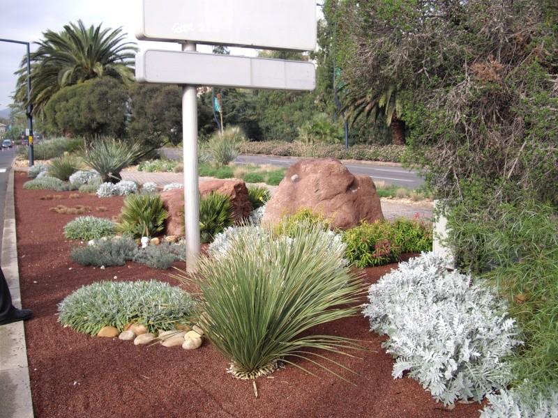 """HYERES LES PALMIERS  """"jardins secs"""" Imgp0413"""