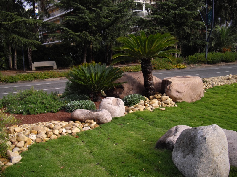 """HYERES LES PALMIERS  """"jardins secs"""" Imgp0418"""