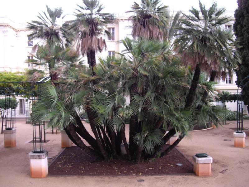 """HYERES LES PALMIERS  """"jardins secs"""" Imgp0420"""