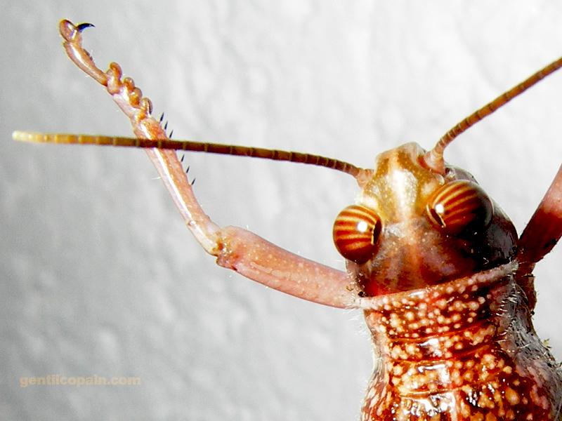 Insectopia Imgp6710
