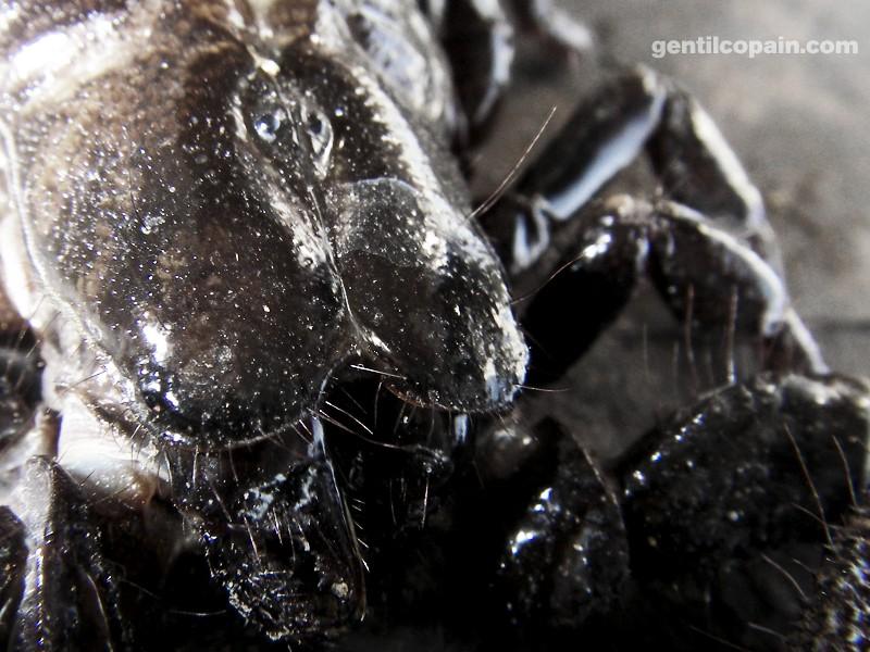 Insectopia Imgp7210