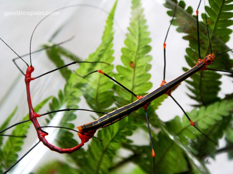 Insectopia Oreore10