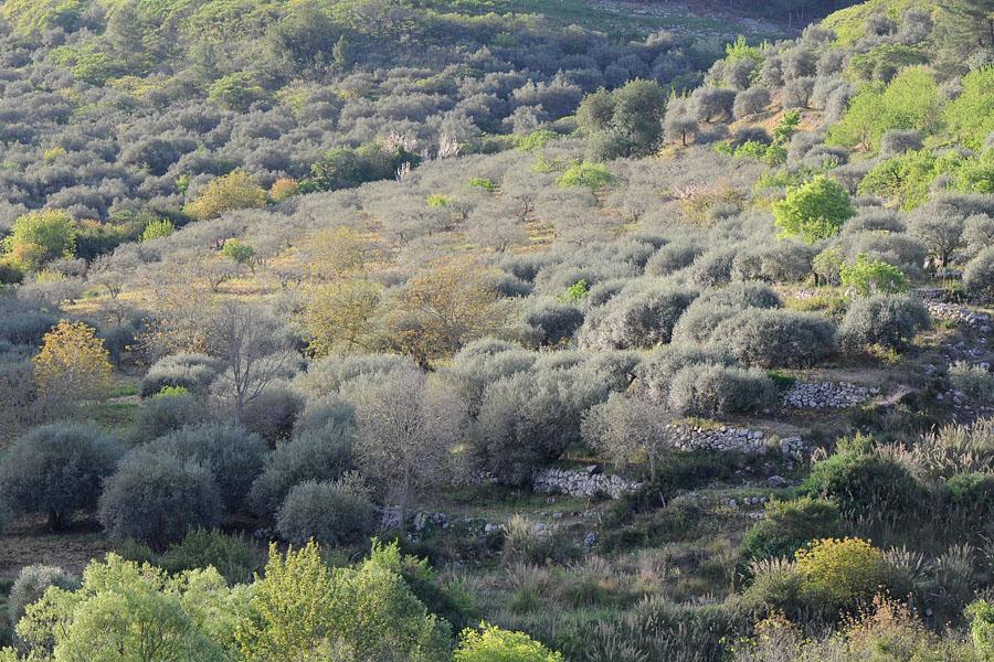 Trésors de Sicile ... Dsc_0216
