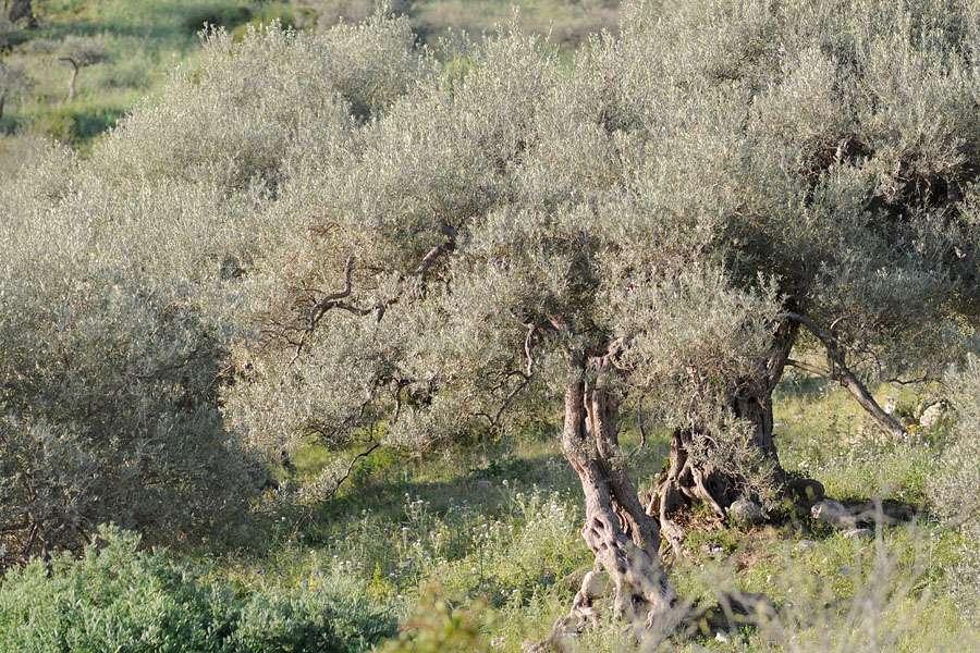 Trésors de Sicile ... Dsc_0217