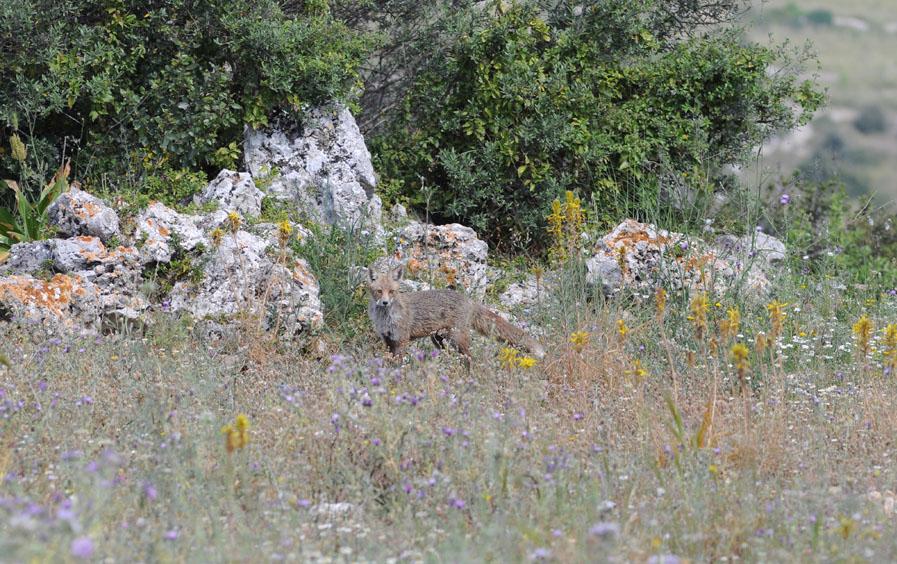 Trésors de Sicile ... Dsc_0514