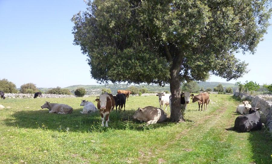 Trésors de Sicile ... P1190112