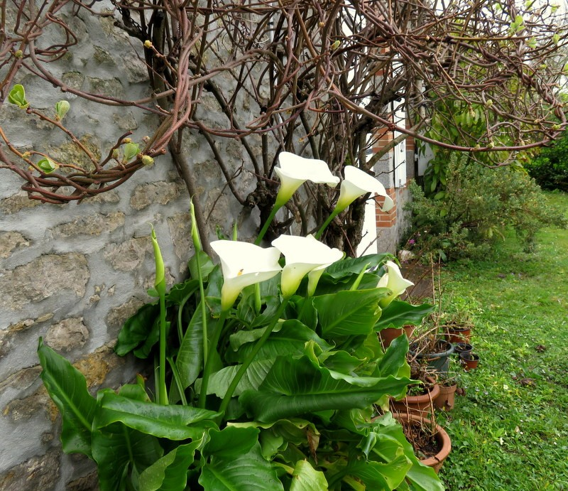 Jardins 2016 ! - Page 4 00310