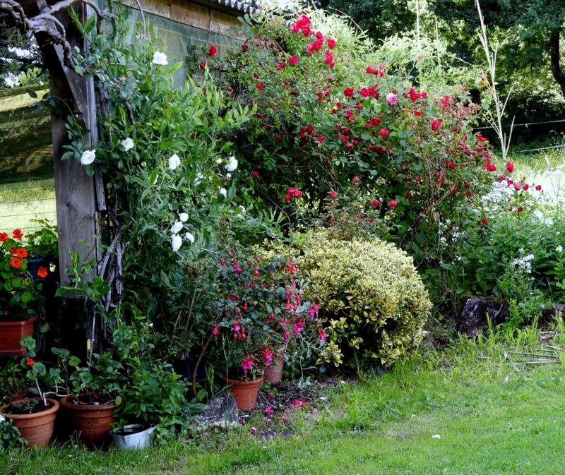 Jardin 2020 ! - Page 5 Dscn0513