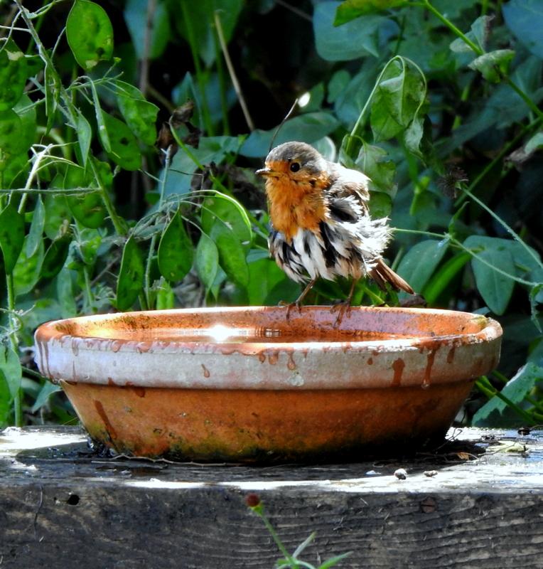 oiseaux .... Dscn0516